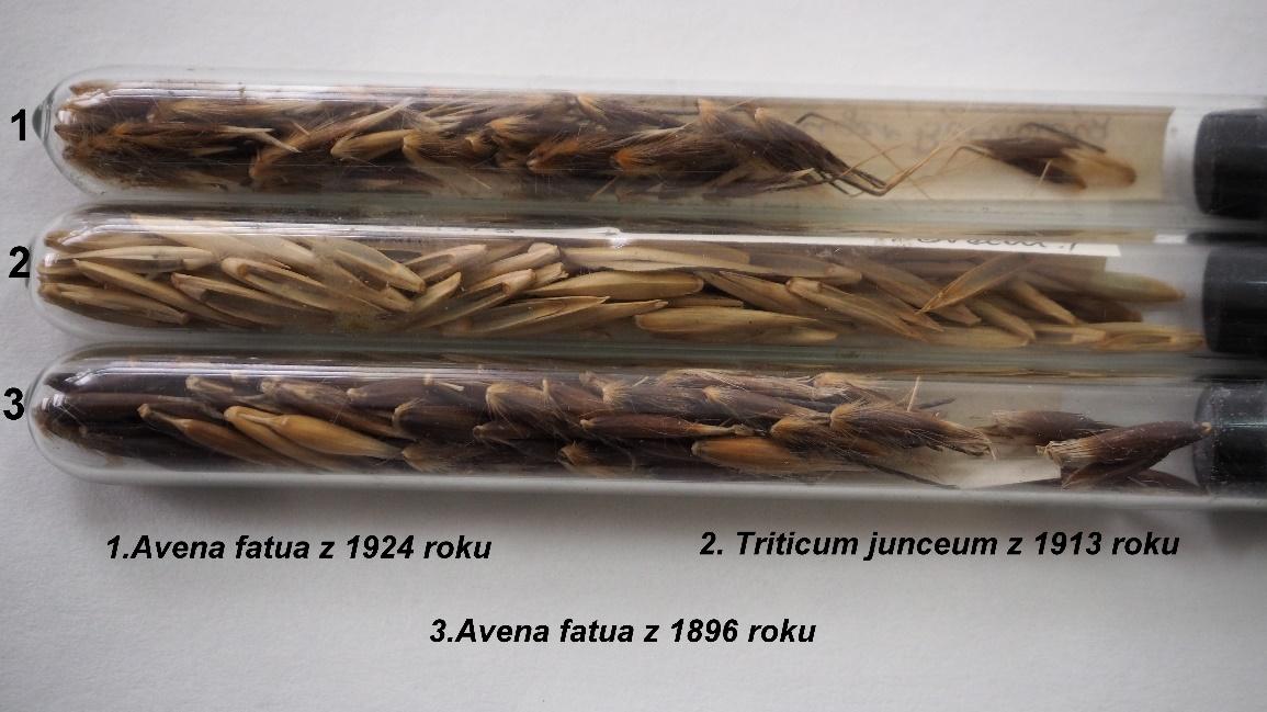 Sposoby przechowywania okazów w herbarium Krajowego Centrum Roślinnych Zasobów Genowych IHAR – PIB