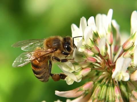 Powiatowe Spotkanie Pszczelarskie
